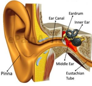 inflammatory process in the middle ear